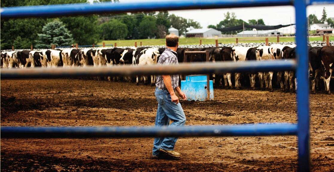建设设计规划 养猪场养牛场猪舍牛舍施工建造养殖场设备销售